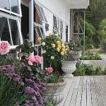 deck_roses_lge